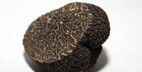 accord vin truffe